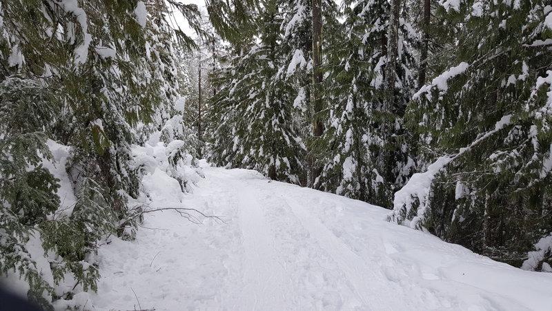 Trail snapshot