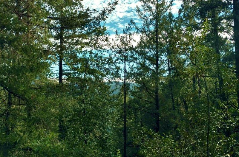 The ridge across the Amaya Creek Valley is seen through the beautiful forest along Amaya Creek Road.