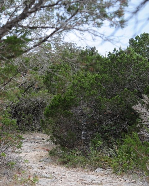 Main Loop Trail, Friedrich Wilderness State Park, San Antonio, Texas