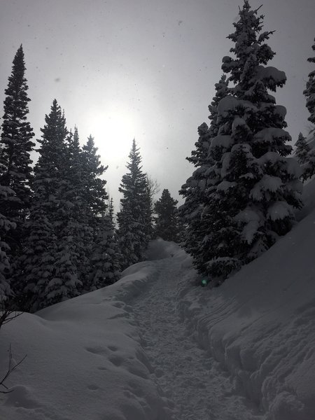 Snowy trail to Dream Lake