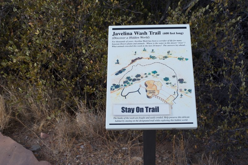 The Javelina Wash Trail goes around the back of the visitor center and provides information regarding life in the desert.