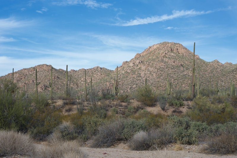 Views of Saguaro cacti and the surrounding hills are all around you.