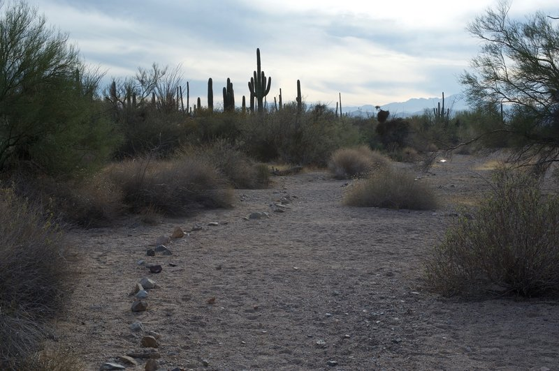 The trail as it makes its way through the wash.