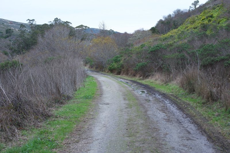 The trail follows an old farm road for the first mile.  Made up of gravel and dirt, it makes for easy walking.