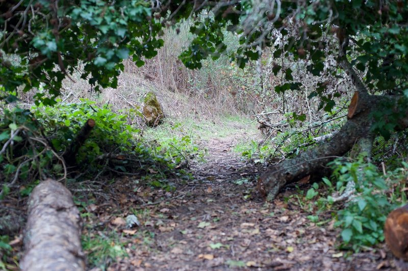 From here, the trail passes under a fallen tree and becomes a singletrack dirt trail. It's little more than an animal trail at this point.