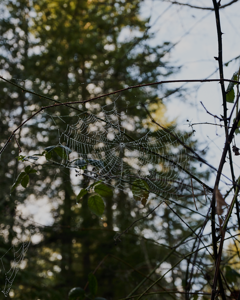 Oddly, this abandoned web was the most visible sign of non-plant wildlife on that perfect January day