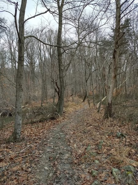 Along the orange trail