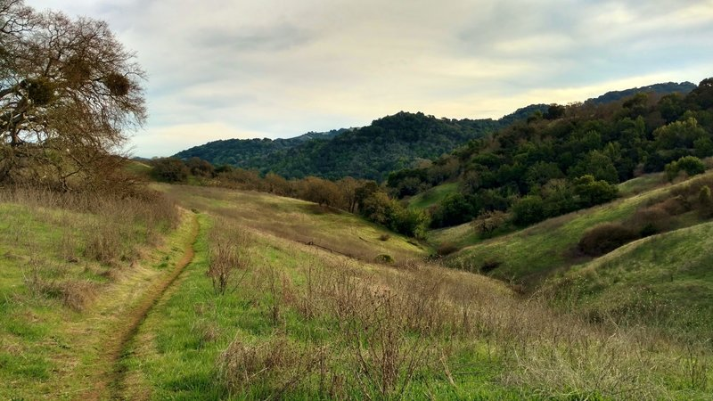 Vallecito Trail travels through the grass and wooded hills of Calero County Park.