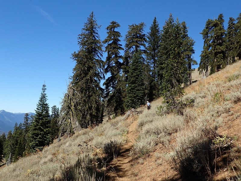 Just north of the junction with the Middle Boulder Lake Trail