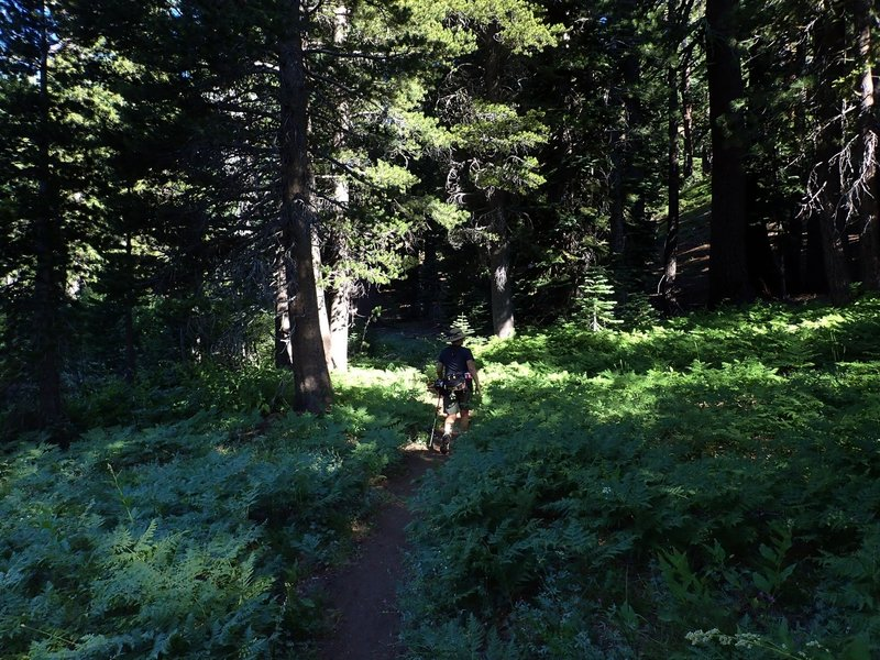 In forest shortly before reaching the PCT
