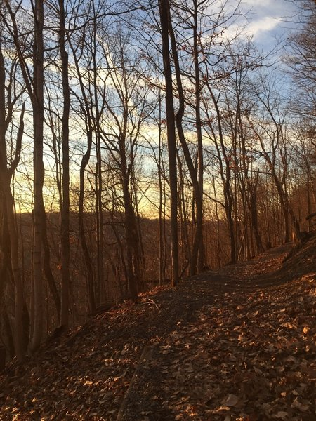 Evening view down Whitmore Park Trail