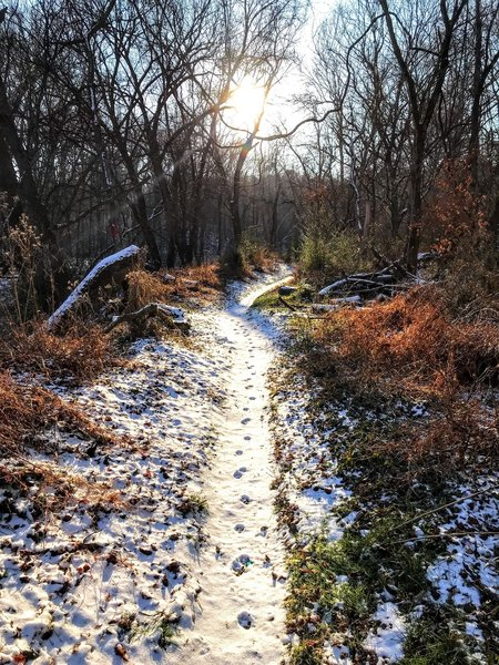 Fox tracks dotting the trail