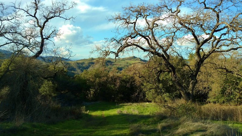 The wooded and grass hills of Serpentine Loop Trail.