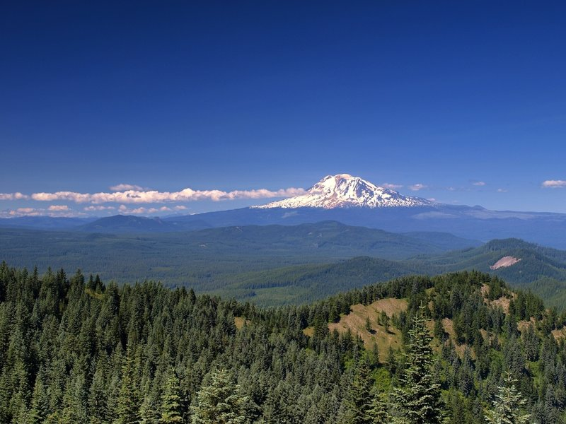 Mount Adams from the summit of Little Huckleberry.