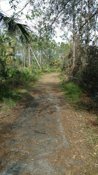 Wide trails make for easy navigation.