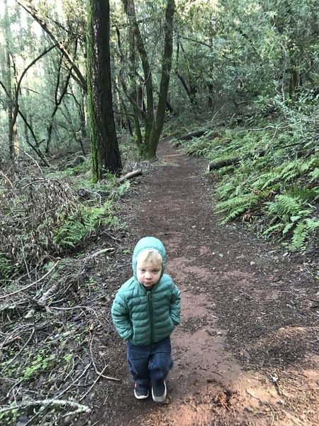 Brooks hiking the fern elevation.