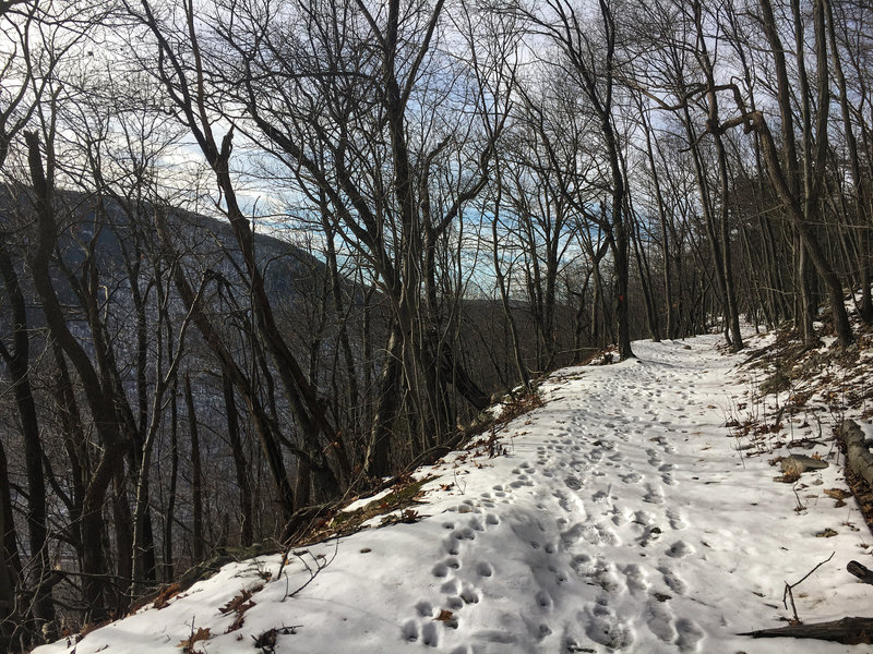 Snow covered trail leading to the Ledge Quarry.