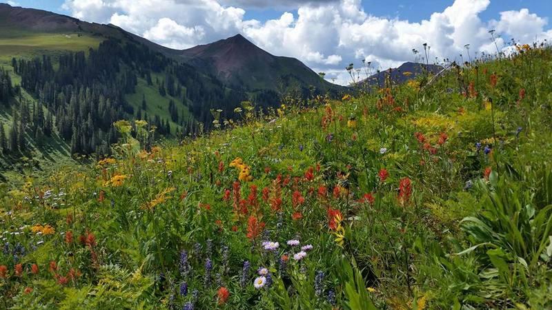 Wildflowers, looking southwest.
