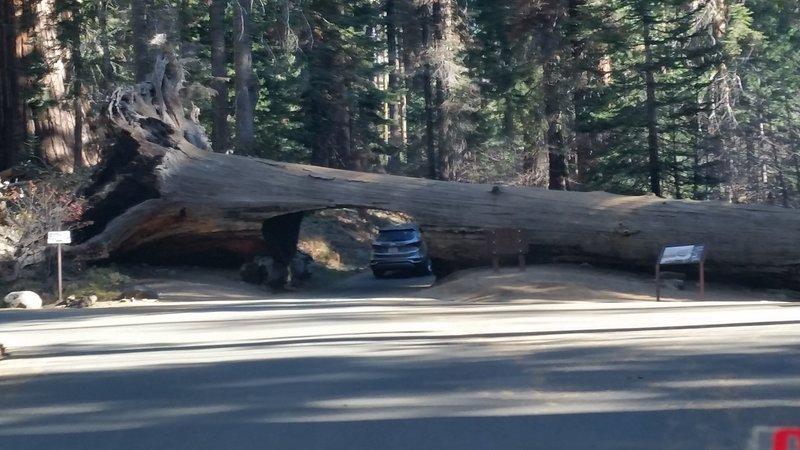 Tunnel Log.