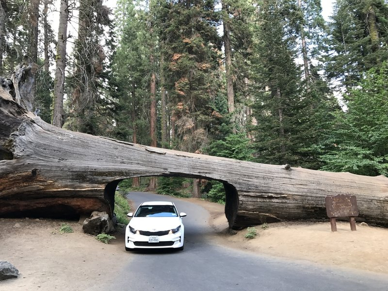 Tunnel Log, Sequoia National Park.