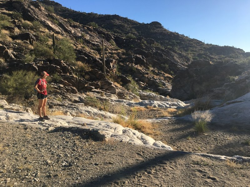 The rocky/sandy bottom of the canyon that makes up a portion of the trail.