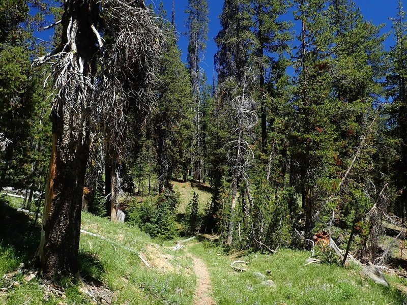 Along the Pumice Flat Trail