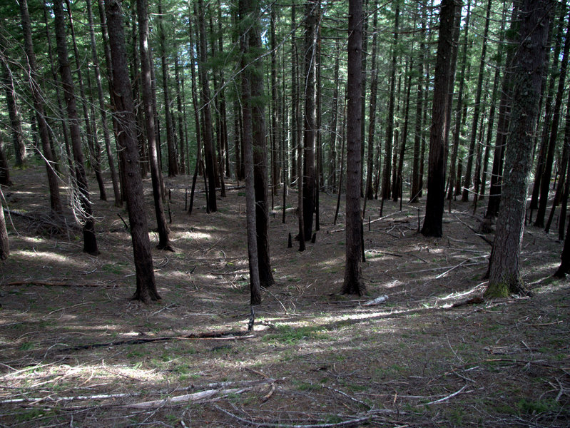 Open forest on the slopes south of Bald Mountain