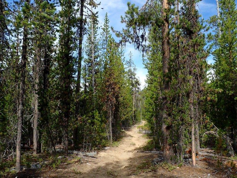 Along the Tenas Peak Trail