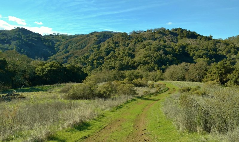 Cottle Trail ends after running through a high meadow nestled among the forested foothills of the Santa Cruz Mountains.