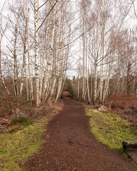 Although Mercer Slough is fully surrounded by urbanization, it provides a nice break from city life