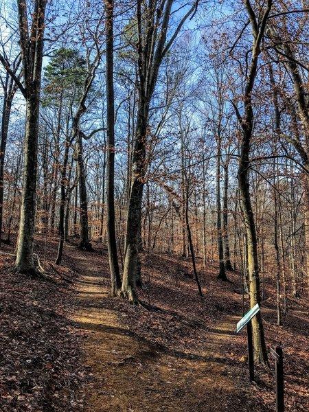 Splitting of the loop trail