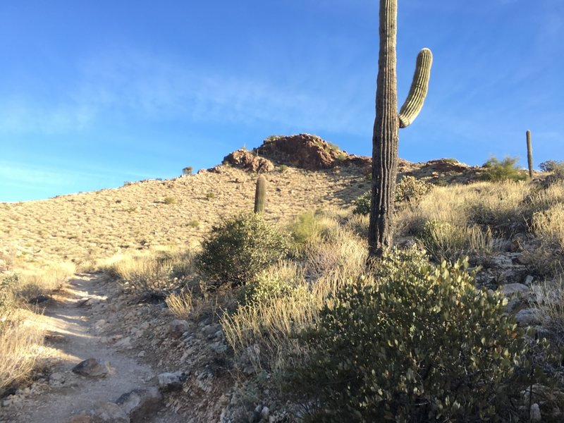 A mild incline out of Mesquite Canyon