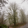 Lord Hill is full of moss-covered old growth