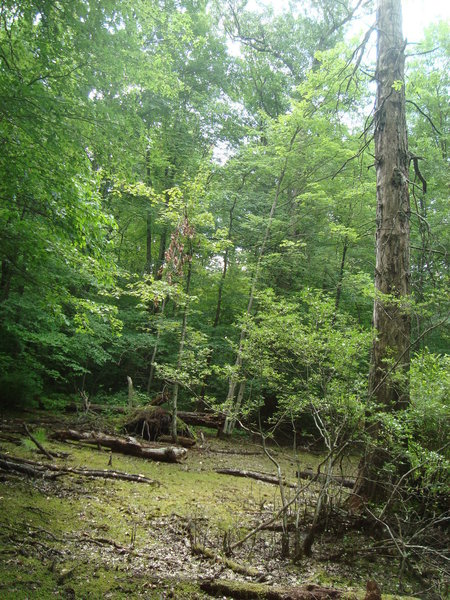 Swamp Trail in dry season