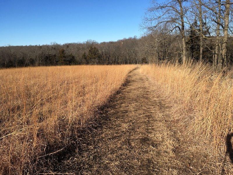 A section of trail through tallgrass prairie along the tree line.