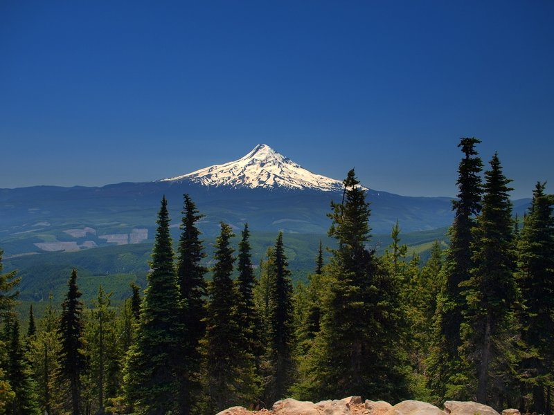 Mount Hood from the summit of Mount Defiance