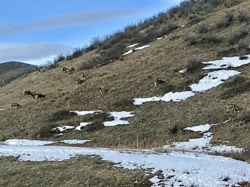 Deer grazing near the trail