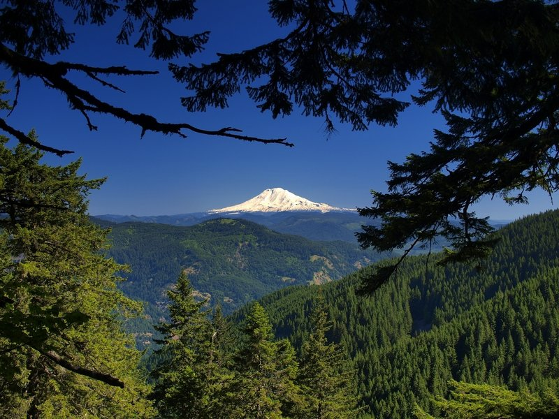 Mount Adams from the Starvation Ridge Trail