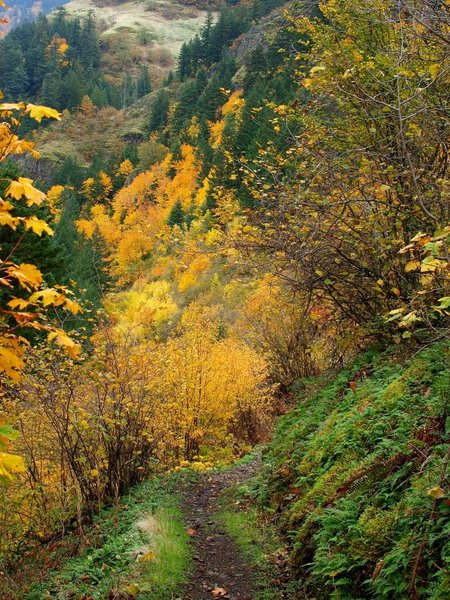 Fall on the lower Mount Defiance Trail
