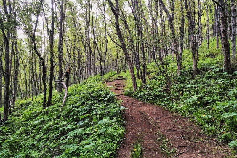 Following the contours on the Turnagain Arm Trail.