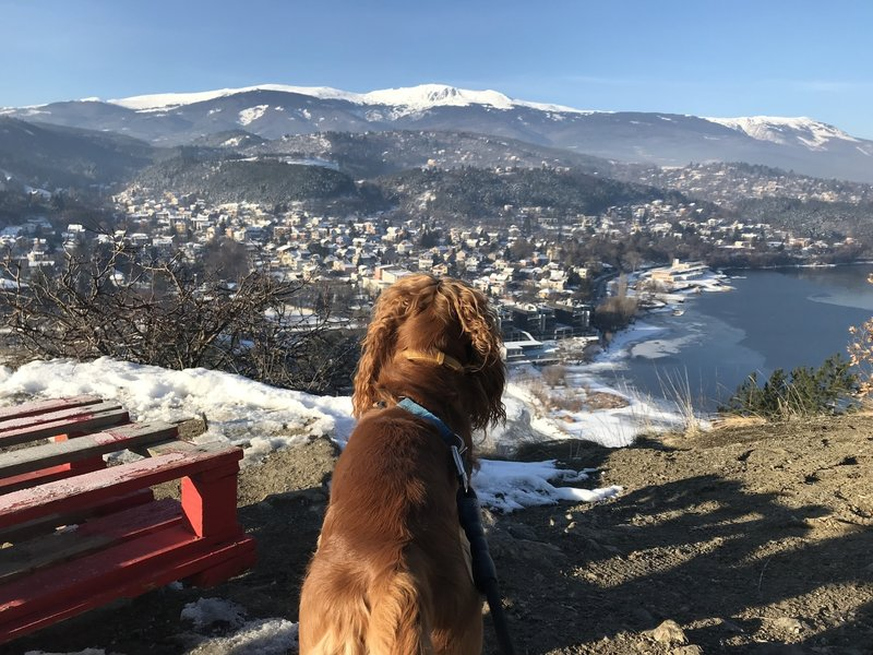 The view of Vitosha in the distace with Pancharevo below and Oliver in the foreground