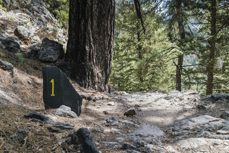 The first 5 km of the Samaria Gorge trail descend to the gorge proper through a thick forest.