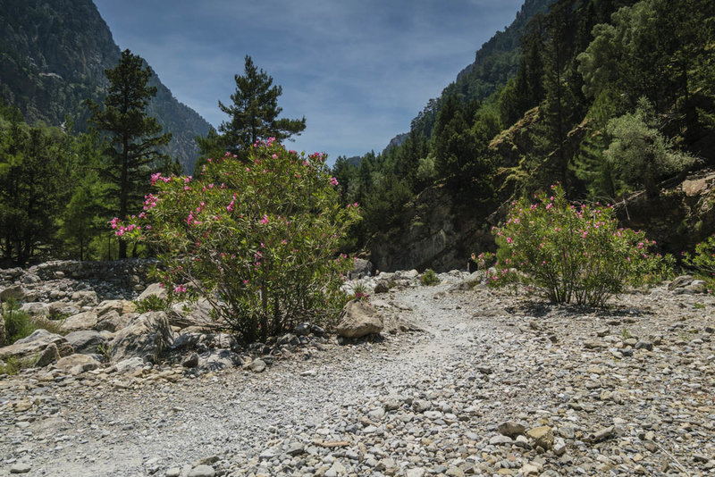 The best time to visit the Samaria Gorge is just after it opens in May when the flowers are plentiful and in bloom, the temperature is still moderate, and the tourists are few