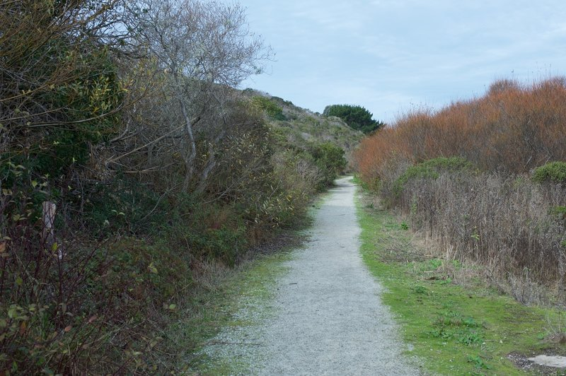 The trail is gravel as it makes its way below the bluff. Birds can be seen flying among the bushes in this corridor.