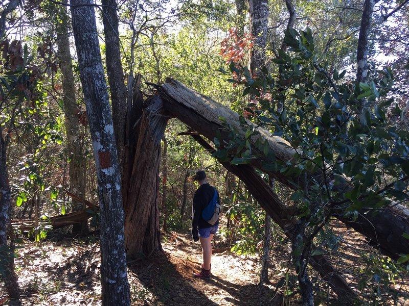 Along the Garden of Eden Trail.