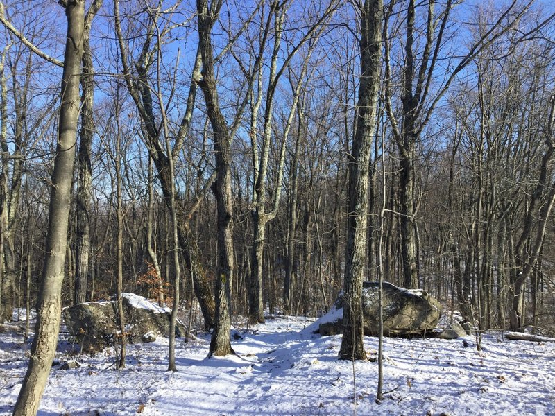 A snowy trail in the woods.