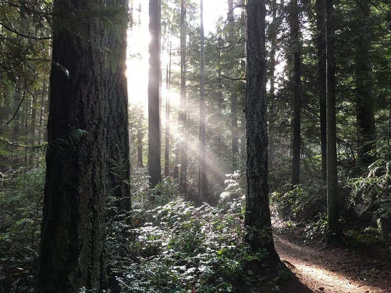 Typical views from the Grand Forest East trails on Bainbridge Island