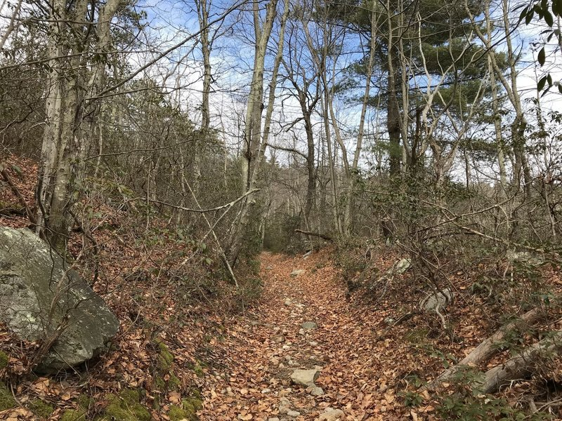 The Laurel Run Trail is scenic, even in the dead of winter