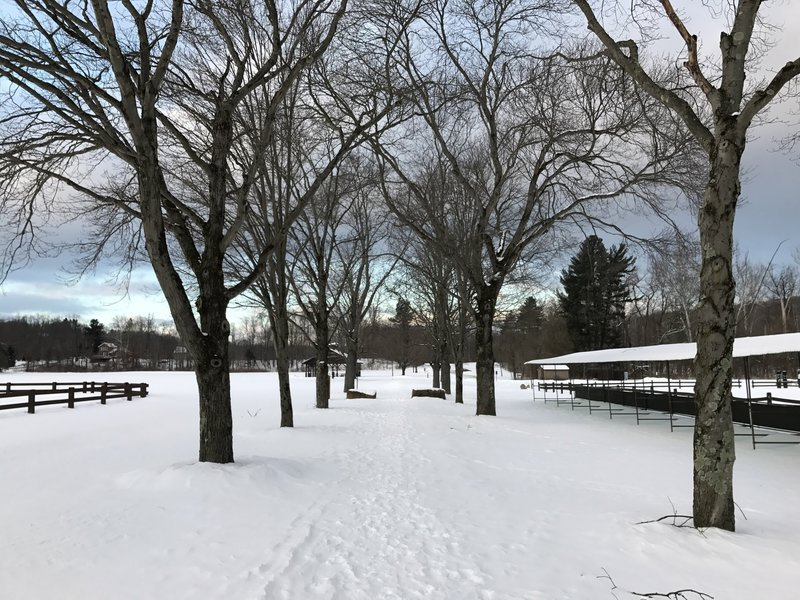 Pathway through polo fields, covered in snow.