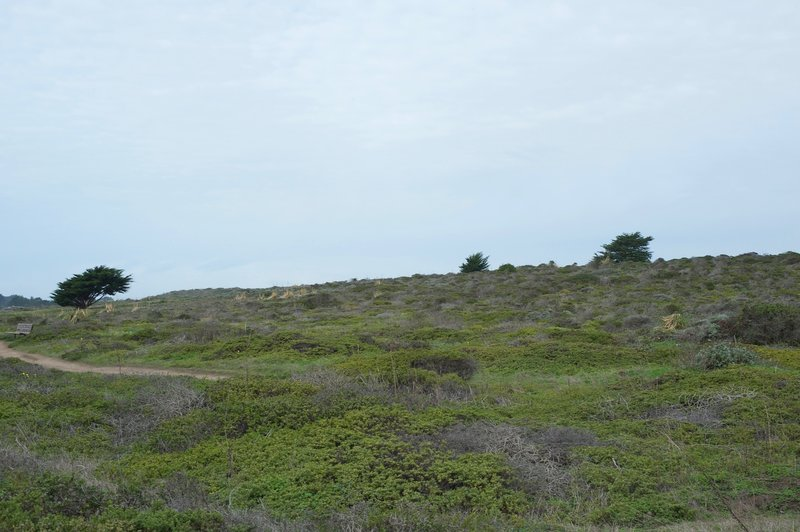 Ross' Cove Trail cuts through a windswept landscape of low shrubs and few trees.